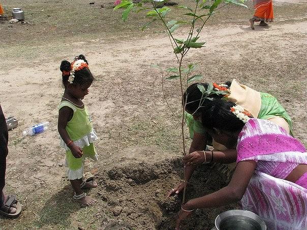 За обучение заплатят деревьями