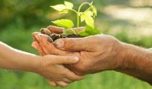 Эко-земледелие