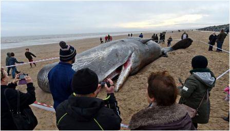 Выброшенный кит