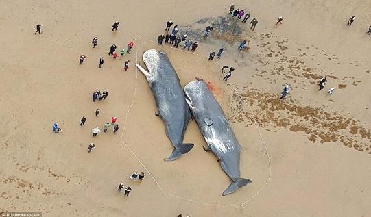 Вот, что нашли в желудках мертвых китов…