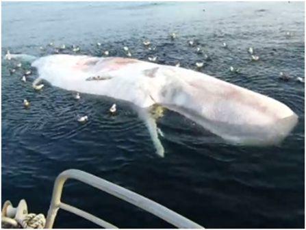 молодой кит