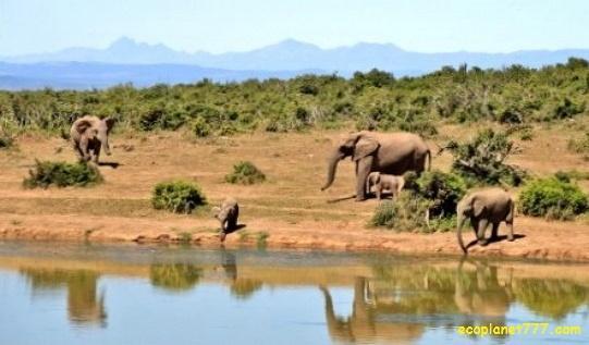 Чистая пресная вода для диких животных