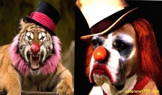 10 причин не посещать цирки с животными