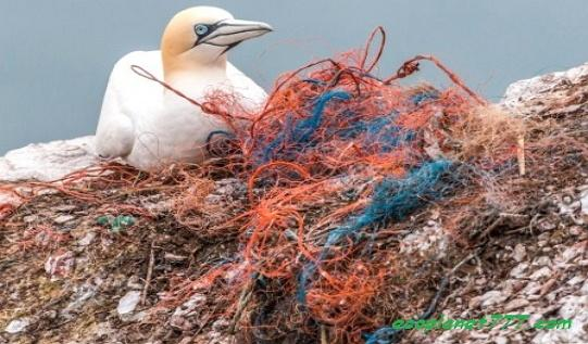 Пластиковые орудия лова