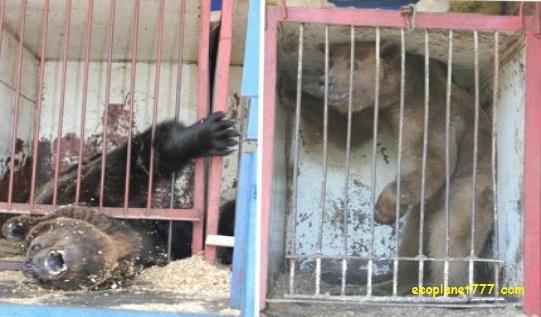 Животные в цирках рождаются в неволе