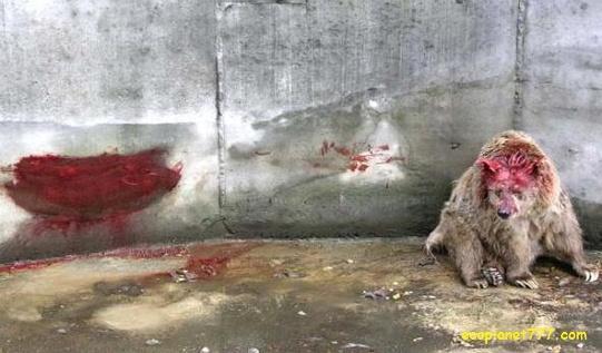 Животные в цырке причиняют вред сами себе
