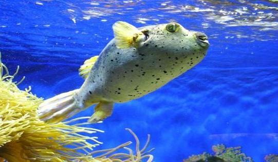 Польза морской рыбы для здоровья человека