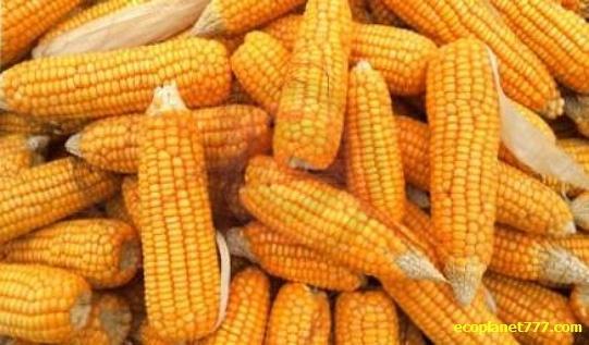 Corn Кукурузные пакеты