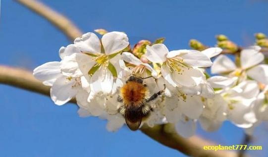 Решающее значение насекомых для биоразнообразия