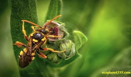 Резкое снижение насекомых
