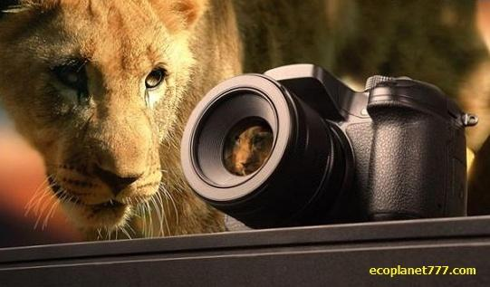 Сафари и фотографирование диких животных