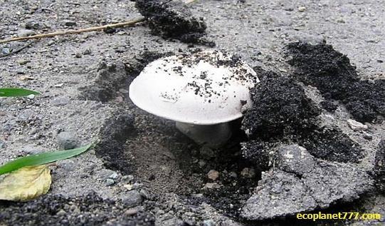 Грибы разрушают бетон