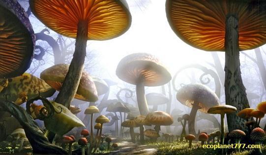 В воздухе летают миллиарды спор грибов