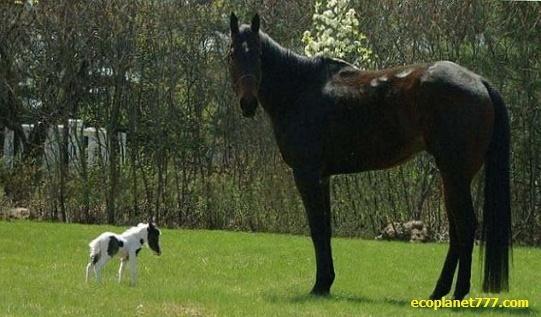 Наименьший конь