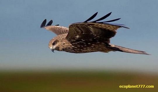 Птицы ориентируются в полете