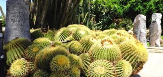 Кожа из кактуса нопаль
