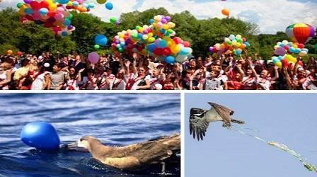 Животные страдают от воздушных шариков