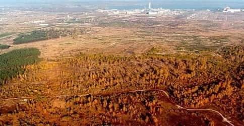 Рыжий лес Чернобыля