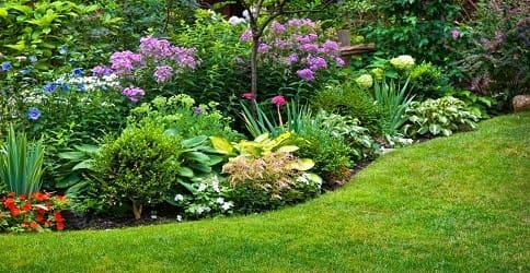 Ароматные душистые садовые растения и цветы