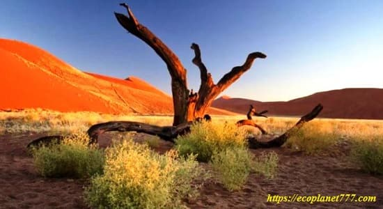 Растения в пустыне Сахара